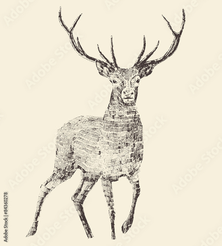 Fotobehang Hipster Hert Deer Engraving, Vintage Illustration, Vector