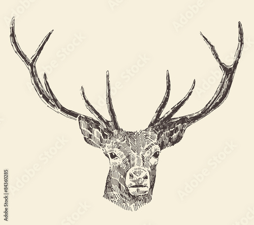 Aluminium Hipster Hert Deer Head Vintage Illustration, Hand Drawn, Vector