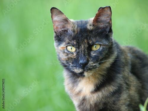 Poster 緑の中のサビ猫