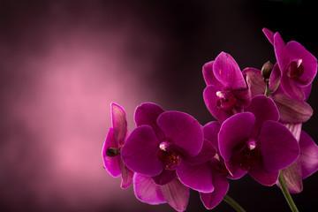 Orchidea w ciemne tło zamazane pole