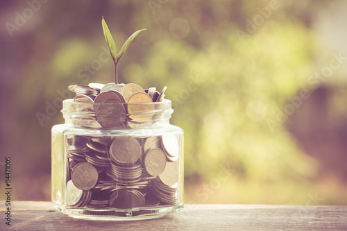 Fototapeta plant growing out of coins with filter effect retro vintage style