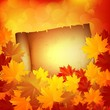 Autumn background with leaves and a paper