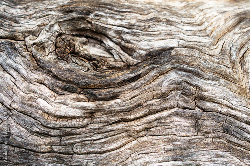 Macro of a bark of olive tree