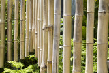 Bamboo Chimes poster