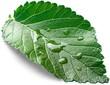 Leaf, Water, Drop.