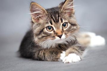 portret leżącego kota