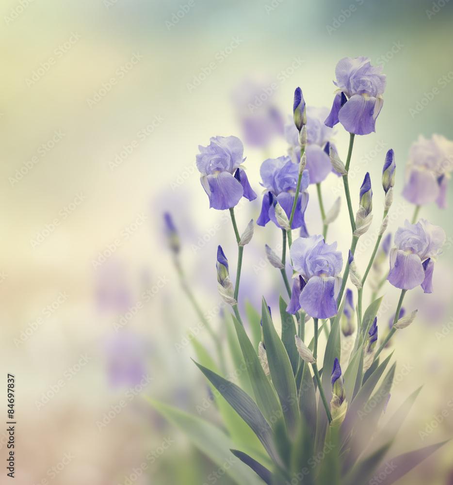 cr dence de cuisine en verre imprim iris flowers nikkel. Black Bedroom Furniture Sets. Home Design Ideas