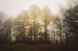 autumn trees on misty day