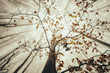 upward view in forest with autumn leaves on tree