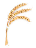 Fototapety Ripe ears of wheat isolated on white background