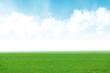 Fototapeta - zielone pole trawa i błękitne niebo