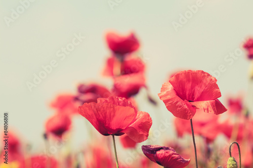 Poster Poppy flowers retro peaceful summer background