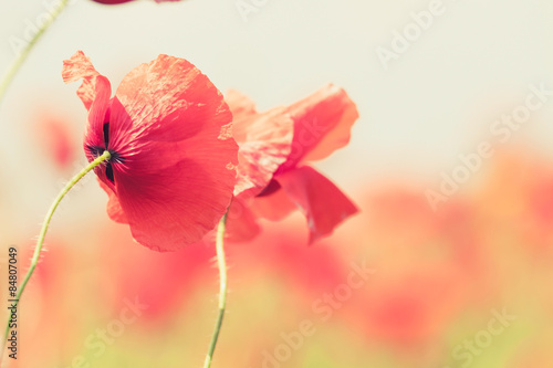 Poppy flowers retro peaceful summer background - 84807049
