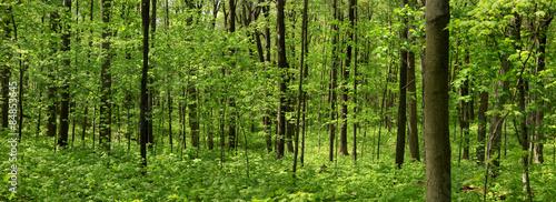 Spring tree landscape