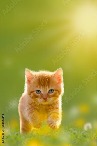fototapeta na ścianę Junge über eine Katze springt Wiese
