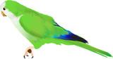 green parrot - vector