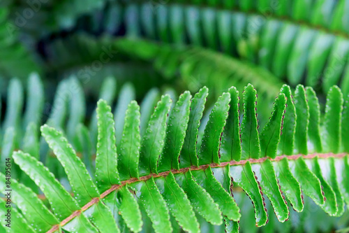 Papiers peints Bambou green fern branch on stone background