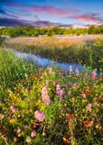 Fototapety Texas Wildflowers at Sunrise