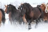 雪原を走る馬 - 84924427
