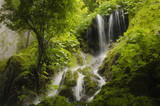 waterfall and dense vegetation in green forest
