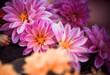 violet summer garden flowers closeup
