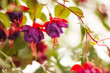 purple and red flowers at garden background