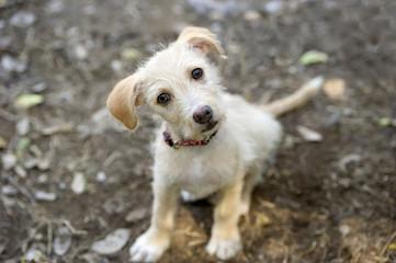 Ciekawskiego psa