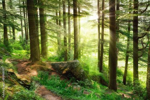 promienie-sloneczne-wpadajace-w-zywy-zielony-las