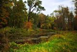 Naklejka autumn in a forest
