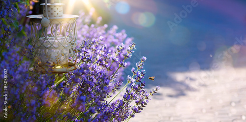 art Summer or spring beautiful garden with lavender flowers Poster