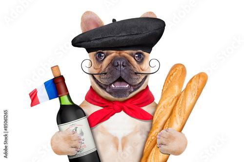 Foto op Plexiglas Franse bulldog french wine dog