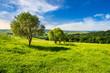 Obrazy na płótnie, fototapety, zdjęcia, fotoobrazy drukowane : few trees on hillside meadow at sunrise
