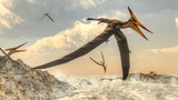 Pteranodon birds flying - 3D render