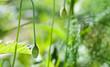 Pflanzen im Wald. Frühling
