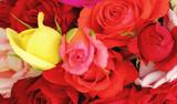 Fototapeta Buds of fresh roses