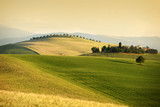 Rolling hills in summer. Val d'Orcia Tuscany - 85129054