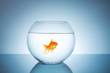 goldfish in a fishbowl - 85193419