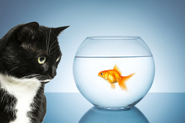 bilder und videos suchen fischglas. Black Bedroom Furniture Sets. Home Design Ideas