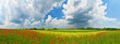 Panorama of summer countryside with red poppies and thunderstorm clouds