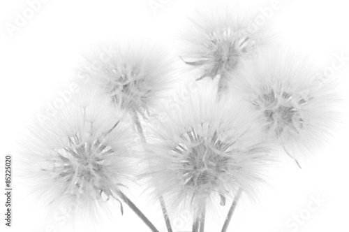 Bouquet of dandelions - 85225020