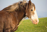 Primo piano di un vecchio cavallo