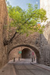 A tree and passageway in Guanajuato, Mexico