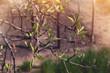 tree twigs at sunset