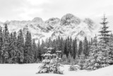 Fototapety Black and white landscape of snow covered pine trees and mountain peaks on a cloudy winter day.