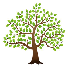 Vector green tree on white background