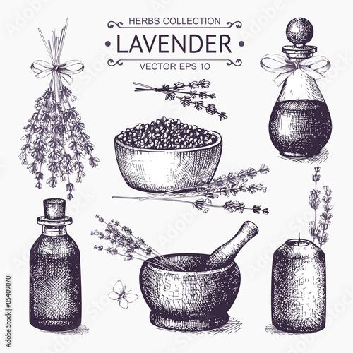 Vector set of ink hand drawn lavender illustration