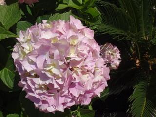 Цветок летом в солнечный день