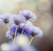blue flowers at abstract background