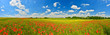 Panorama of poppy field in summer countryside - 85477854