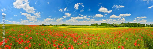 Keuken foto achterwand Klaprozen Panorama of poppy field in summer countryside